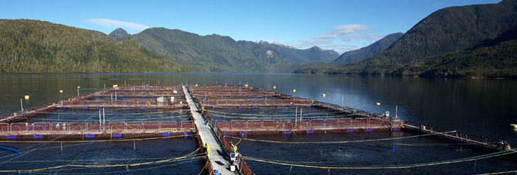 Aquaculture jobs to move to Shelburne in early 2013