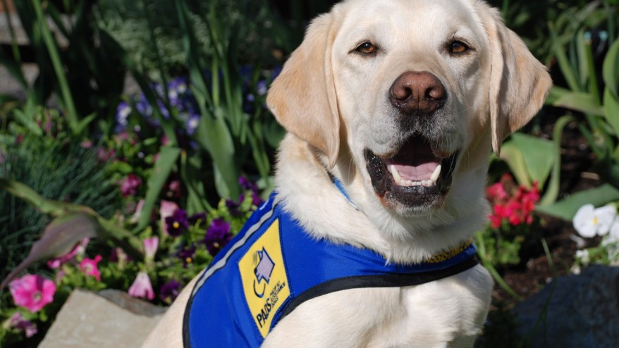 Former Halifax Police Constable Launches Service Dog Training School